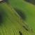 Flux vert